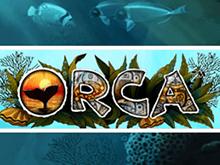 Orca Slot