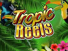 Tropic Reels Slot