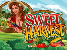 Sweet Harvest Slot